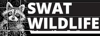 Wildlife Removal &  Animal Control Toronto | SWAT Wildlife