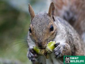 Toronto Squirrel Removal