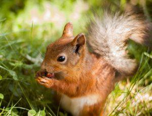 Squirrel Revoval