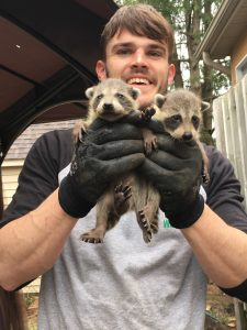 Baby raccoon removal