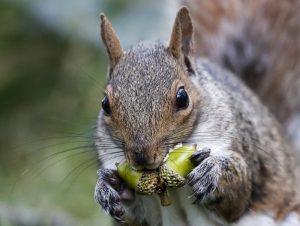 Squirrel Removeal Toronto