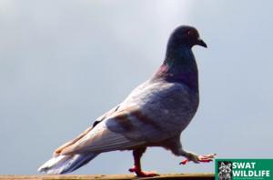 Toronto Bird Services
