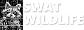 Wildlife Removal &  Animal Control Toronto | SWAT Wildlife