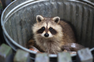 Animals Start Looking for Winter Homes in the Fall…Are You Prepared