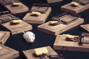rat and rat traps