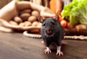 Rat on a wooden table with vegetables and kitchen utensils.
