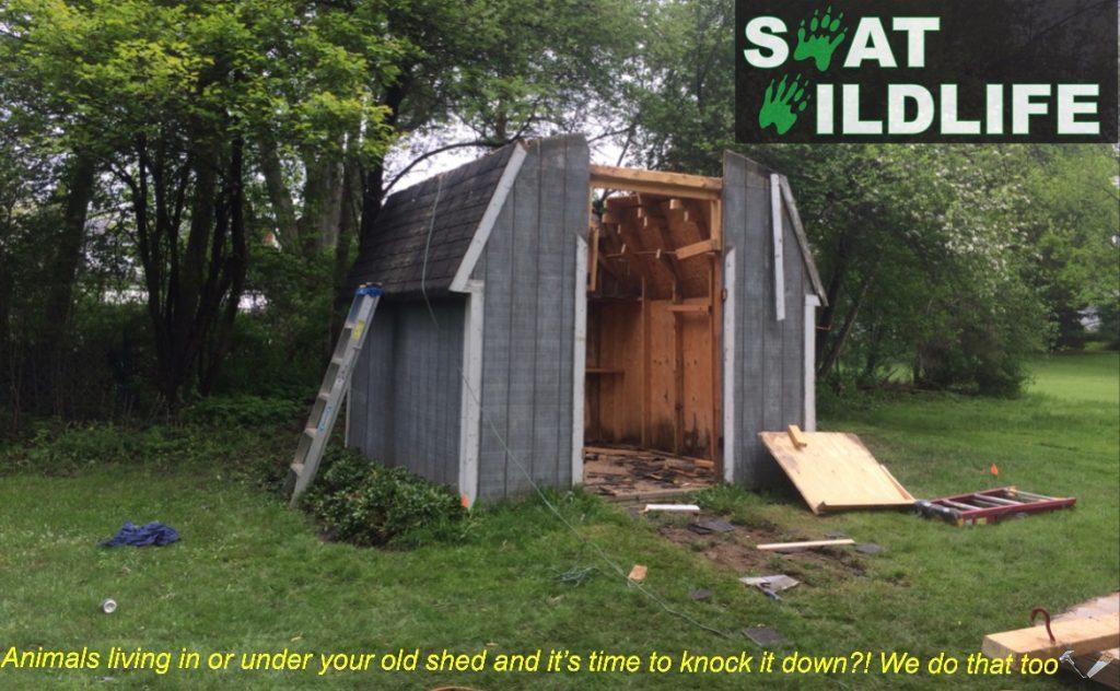 SWAT wildlife shed demolition