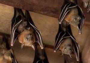 bat removal toronto